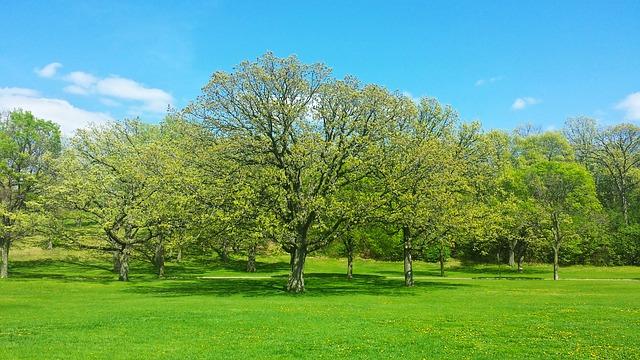 tree-822328_640
