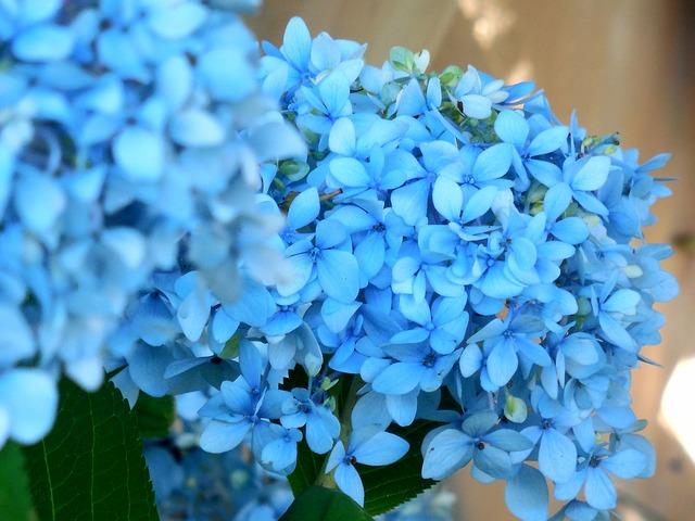 blue-952189_640