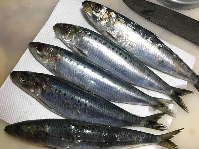 sardine_ni_001