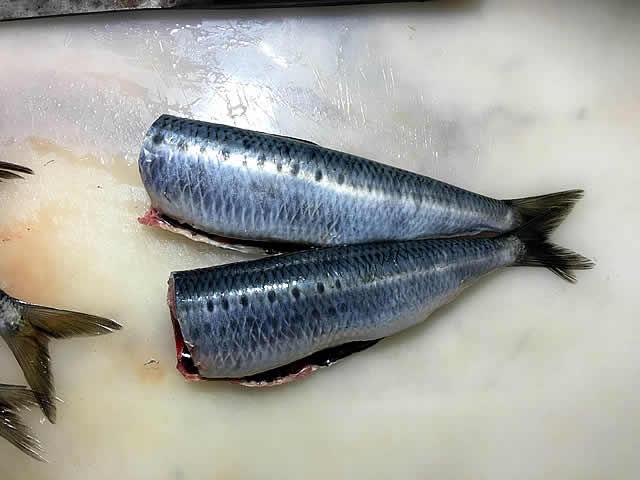 sardine_ni_002