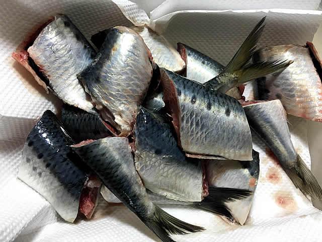 sardine_ni_004