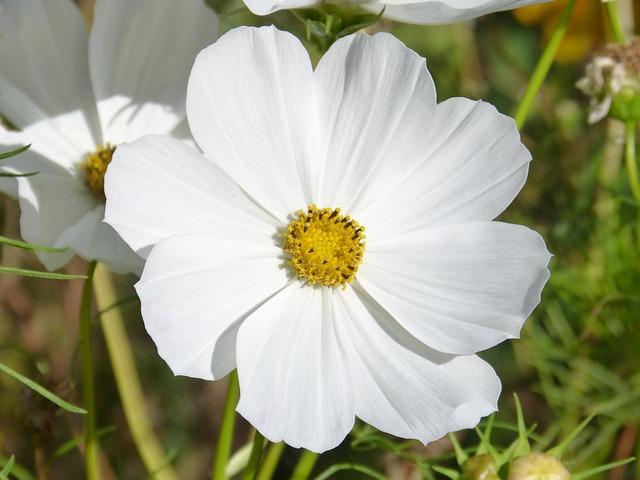 flower-1678770_640