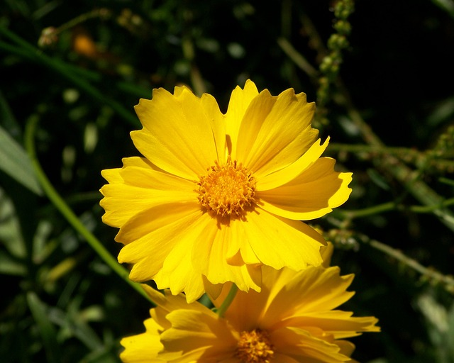 yellow-17835_640